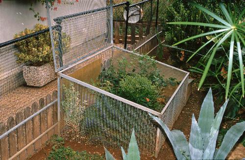 Gestione in cattivit dei rettili for Terrario per tartarughe in giardino