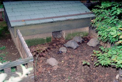 Gestione in cattivit dei rettili for Contenitore per tartarughe