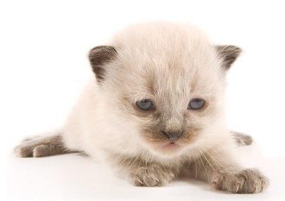 gattino orfano