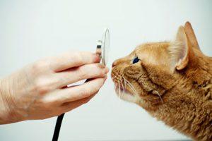 cardiopatie cane gatto