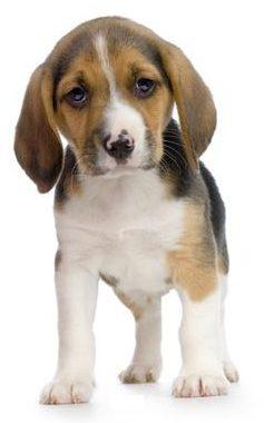 acquisto cane di razza