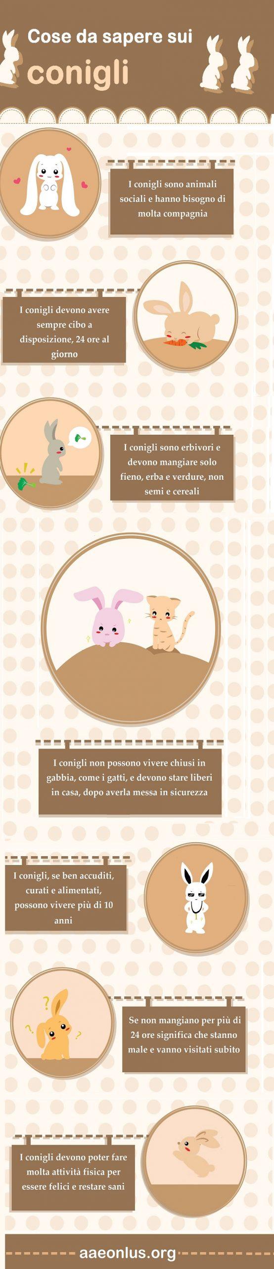 cose da sapere sui conigli