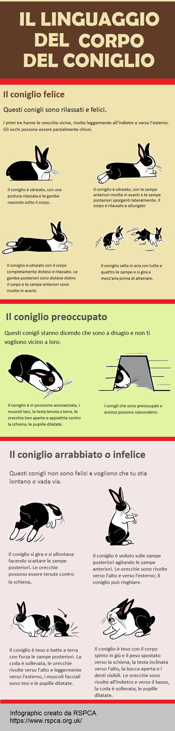il linguaggio del corpo del coniglio