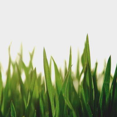 Erba di campo