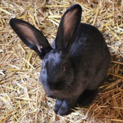 La razza non importa, qualunque coniglio può essere un ottimo compagno