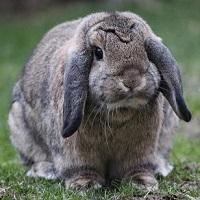 quiz 2 coniglio