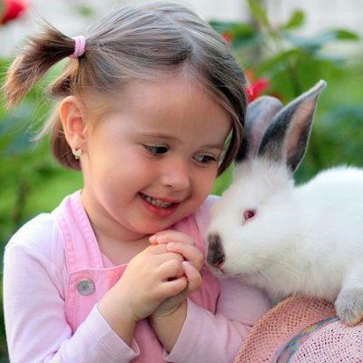 Un coniglio già adulto
