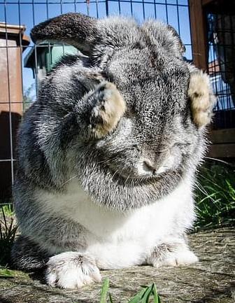 quiz coniglio fail