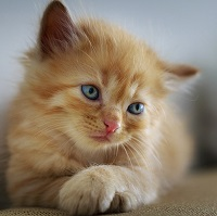 quiz gatto
