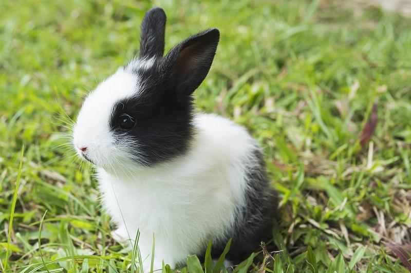 alimentazione coniglietti
