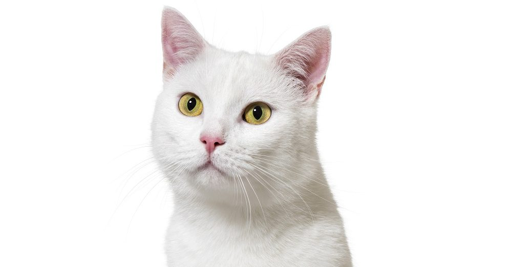 dermatite solare gatto